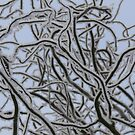 Snow Branches by Wrigglefish