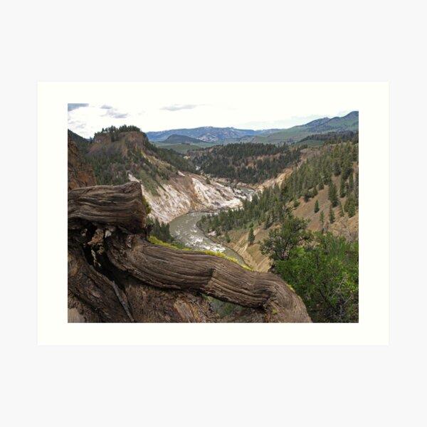 Grand Canyon of Yellowstone Art Print