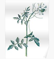 Water Cress, Plant Art Painting Poster