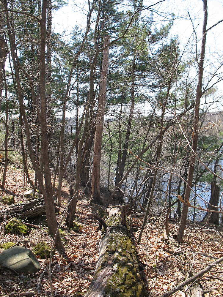 St. Croix River by persnicketier10