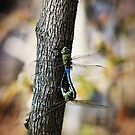 Dragonflies Need Love Too by Shawna Rowe