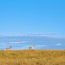 Pronghorn Antelope In The Badlands by J. L. Gould