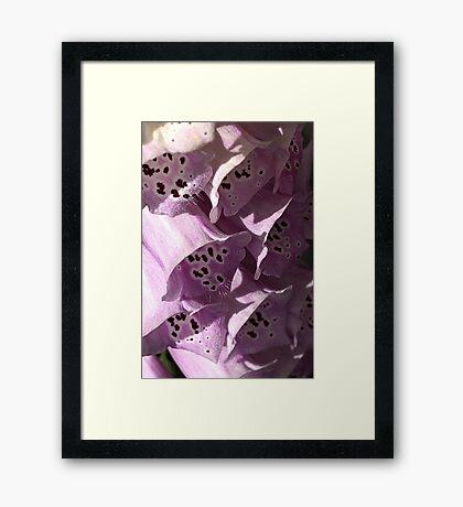 Foxglove Shines Framed Print
