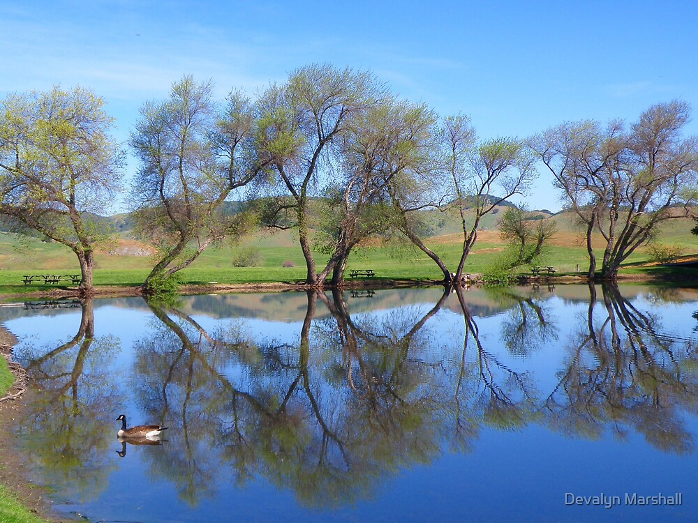 Water Emulates by Devalyn Marshall