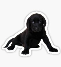 Black Labrador  Sticker
