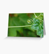 Nature's Corkscrew Greeting Card