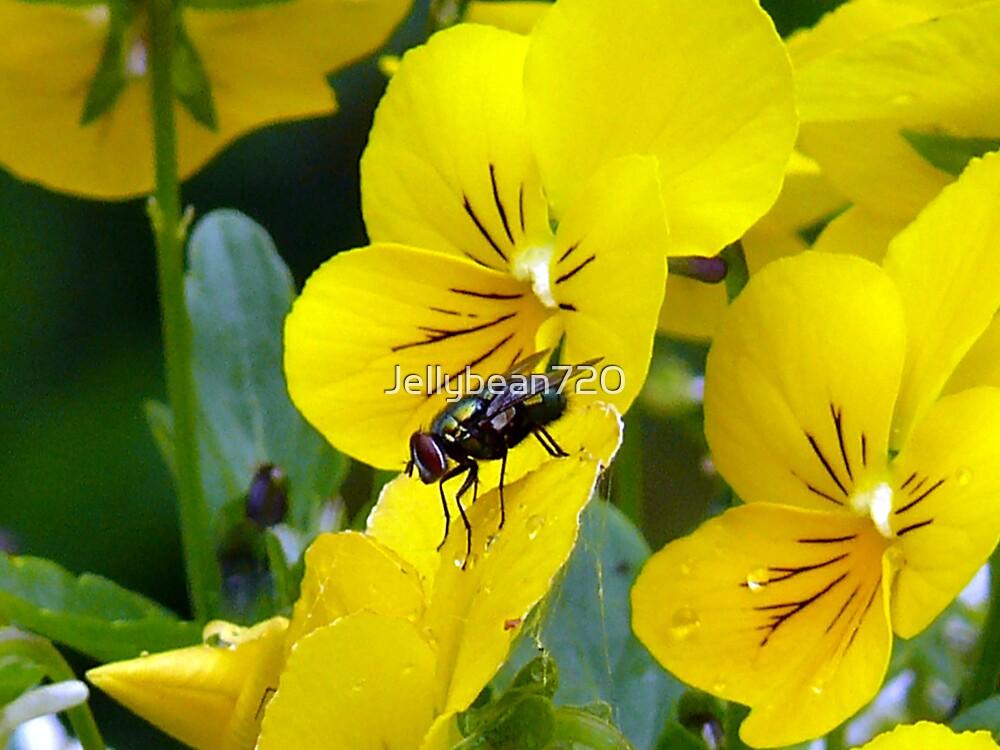 Even Flies Love Beauty by Jellybean720