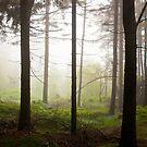 Foggy day by Dominika Aniola