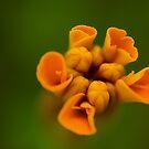 Orange Candy. by Sherstin Schwartz