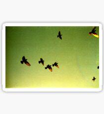 green sky birds, phnom penh, cambodia Sticker