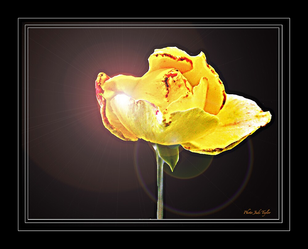 My Special Yellow Rose by Judi Taylor