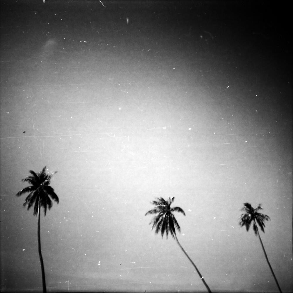 palms, kep, cambodia by tiro