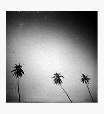 palms, kep, cambodia Photographic Print