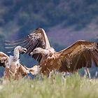 Karate Vulture by Dominika Aniola