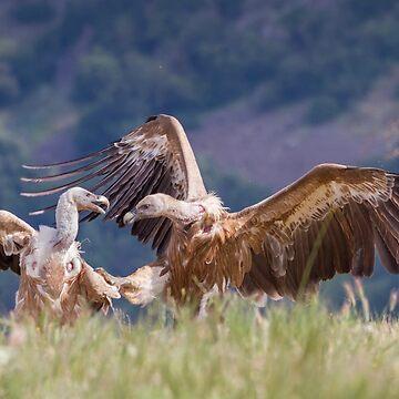 Karate Vulture by domcia