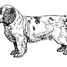 clumber spaniel drawing by marasdaughter