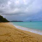 Hawaiian Shores by Barbara  Brown