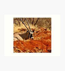 GEMSBOK - Oryx Gazella Art Print