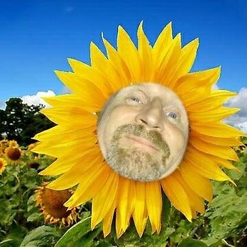 Sunflower Bob by croper