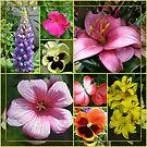 Lupine, Lilien, Geranien und Stiefmütterchen Collage von BlueMoonRose
