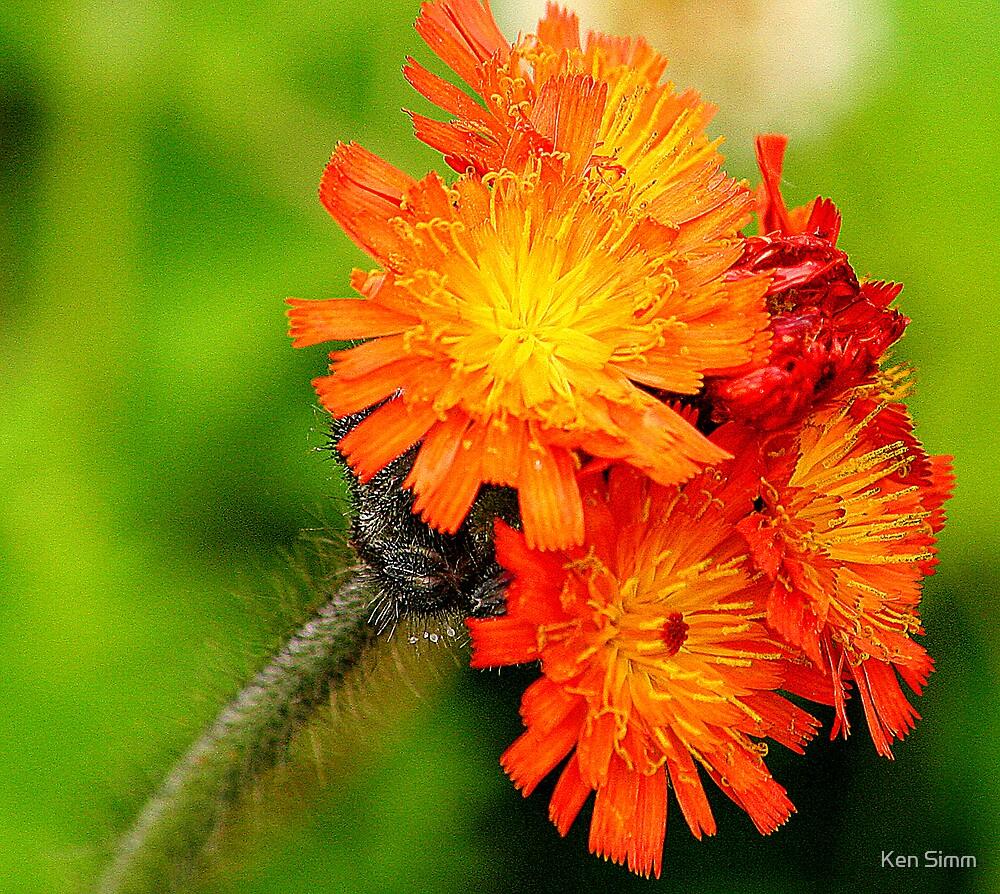 Orange by Kenart