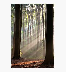 Sun rays in misty morning Photographic Print