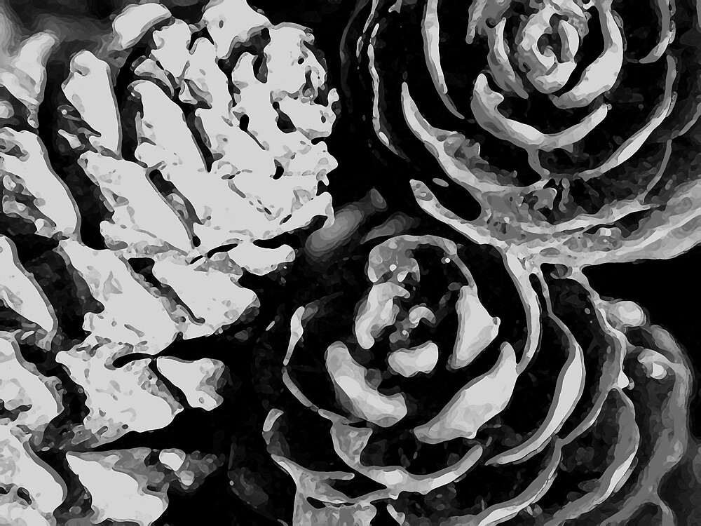pine cones b&w by SNAPPYDAVE