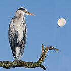 Grey heron  by Alan Forder