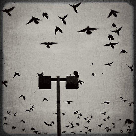 Revenge of the Birds by Trish Mistric