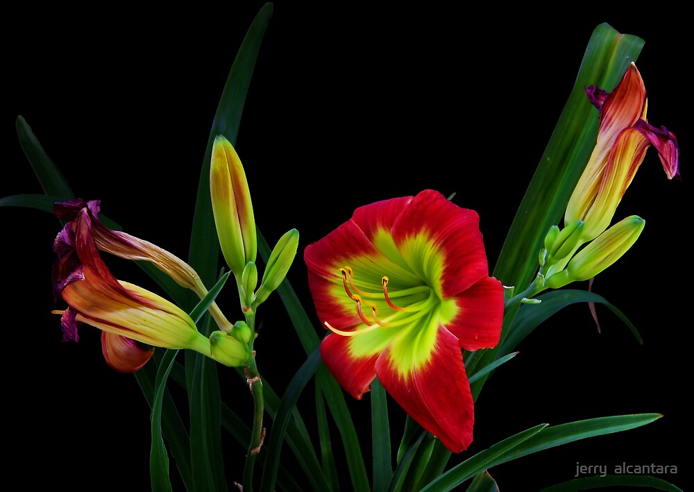 Beautiful by jerry  alcantara