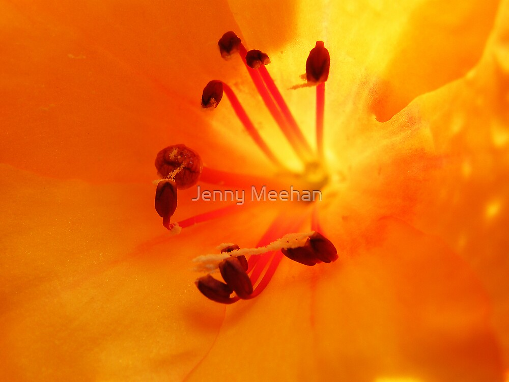 Rhododendron javanicum by Jenny Meehan