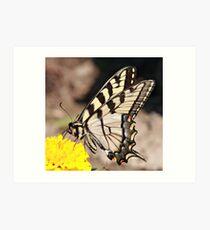 Tiger Swallowtail Art Print
