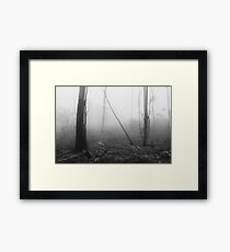 Mountain Ash Trees in Mist 3 Framed Print
