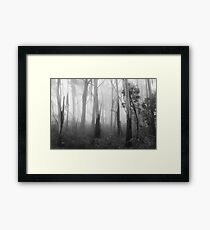Mountain Ash Trees in Mist 1 Framed Print