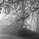 Misty Garden by Geoff Smith