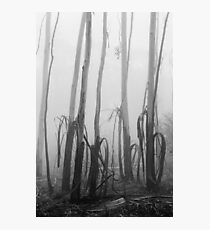 Mountain Ash Trees Photographic Print