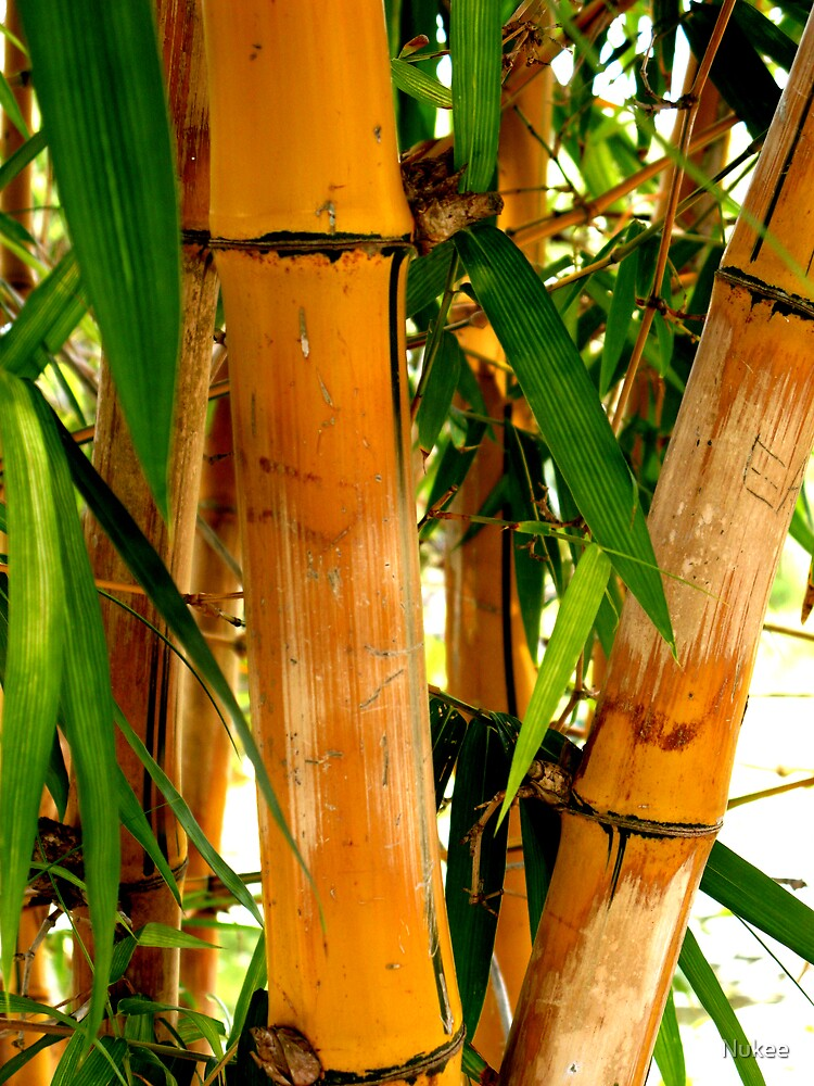 Yellow Bamboo by Nukee