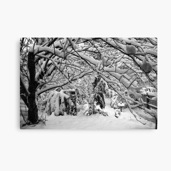 Blackheath Snow 4 Canvas Print