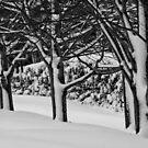 Blackheath Snow 2 by Geoff Smith