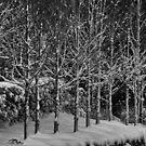 Blackheath Snow 1 by Geoff Smith
