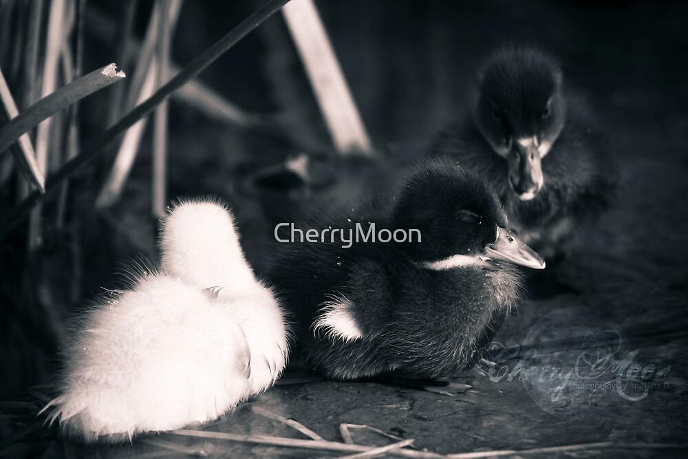 sleepy by CherryMoon