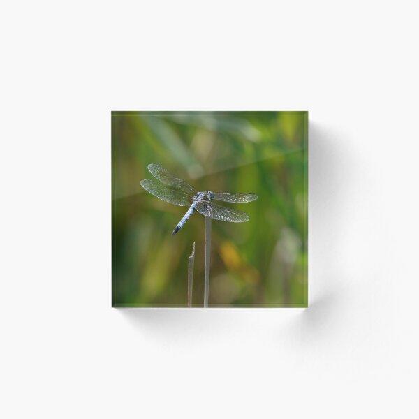 Glistening Dragonfly Acrylic Block
