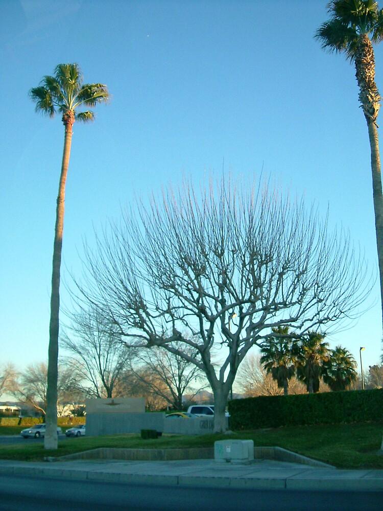 desert tree by romeogigli