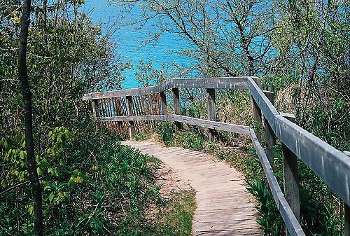 Pathway. by Madeline Antic