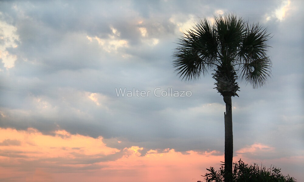 Palmetto Sunrise by Walter Collazo