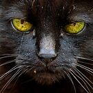 Hard stare by Terri  Kruithof