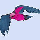 Galah in flight by Anne van Alkemade