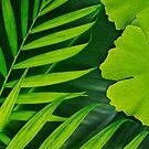 Lush Green Tropical Leaf by artsandsoul