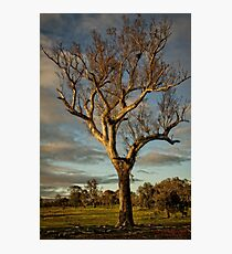 Aranda Bushland Nature Reserve (4) Photographic Print