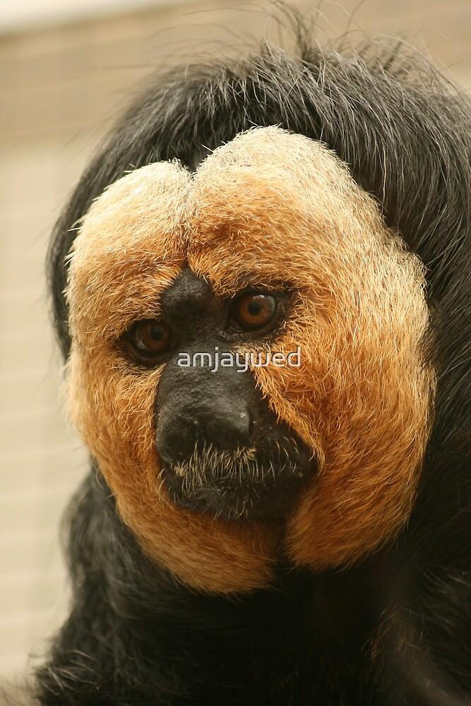 Pale-headed Saki Monkey (Pithecia pithecia) - Twycross Zoo by amjaywed